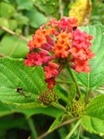 fleur-de-la-foret