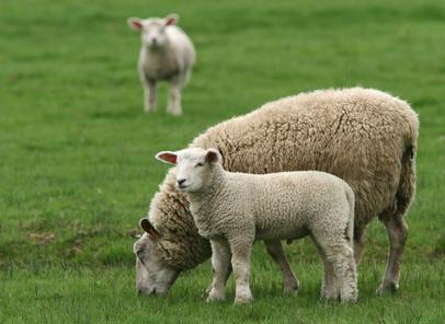 Saling tous les bienfaits de la laine naturelle blog au for L univers de la laine