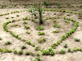 plantation_arbres_coeur